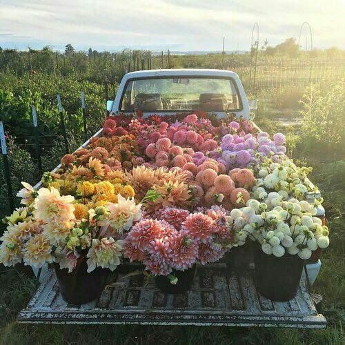 le_muy_fleurs